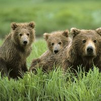 primary-2---s---3---s-Outdoors--The-Three-Bears-1480885769