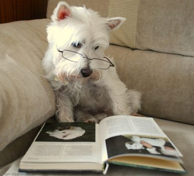 primary-Programs-for-Kids--Paws-to-Read-1485214709