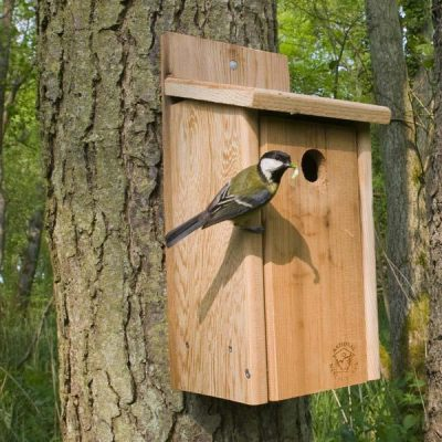 primary-Building-for-the-Birds-1486068635