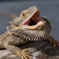 primary-Reptiles---Amphibians-Up-Close---Personal-1486068841