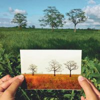 primary-Same-Tree--Different-Day-1486419600