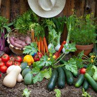 primary-Sustainability-Series--Organic-Vegetable-Gardening-Tips-1486416754