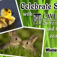 Celebrate Spring: Petting Zoo at Cave of the Winds