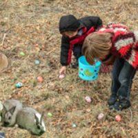 primary-Chocolate-Bunny-Walk-and-Egg-Hunt-1488782515