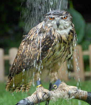 Little Wonders: Animals in Weather