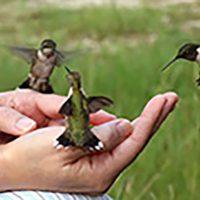 primary-Nature-Adventures--Backyard-Birds-1488899785