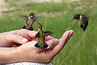 Nature Adventures: Backyard Birds