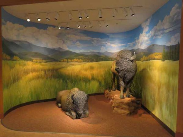 Garden of the Gods Visitor's Center - Buffalo Background