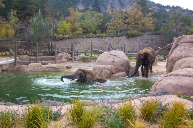 City Of Colorado Springs >> Cheyenne Mountain Zoo - PeakRadar.com