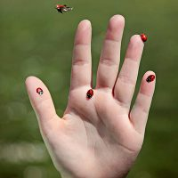 Nature Adventures: Lovely Lady Bugs