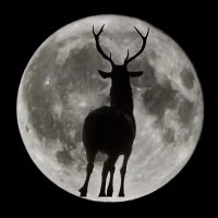 Moonlight Storytelling Hike at Fox Run presented by Bear Creek Nature Center at ,