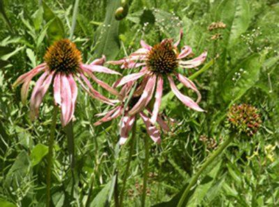 Plant Walk at Bear Creek Nature Center