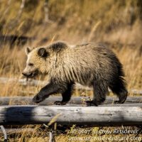 Wildlife Photography: From the Backyard to the National Parks