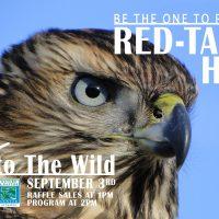 Birds of Prey: Program & Release