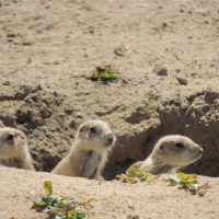 Prairie Dog Hike