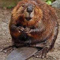 2's & 3's Outdoors: Busy Beavers