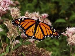 Magic Monarchs