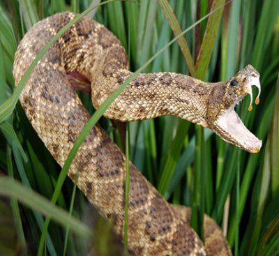 Bear Creek Nature Explorers: Venomous, Poisonous, Exciting-ous!