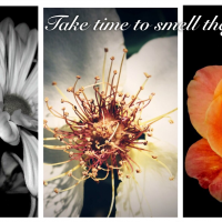 'Take Time to Smell the Flowers'