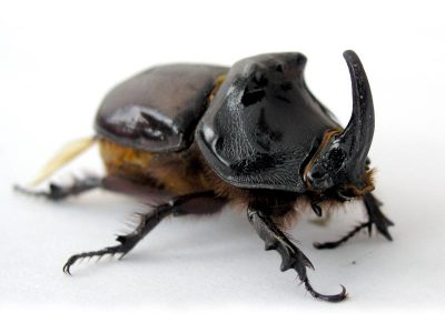 Aiken Audubon Program: Insects