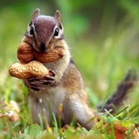 2's & 3's Outdoors: Silly Squirrels