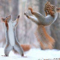 Nature Adventures: Animals in Winter