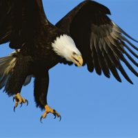 Nature Adventures: Mighty Eagles
