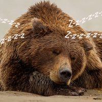 Nature Adventures: H is for Hibernation