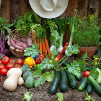 Sustainability Series: Organic Vegetable Gardening for Success