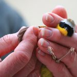 Aiken Audubon Program: One Finch, Two Finch: A short history of Counting Birds