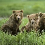 Nature Explorers: Keep Bears Wild