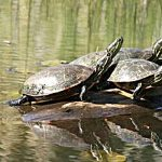 2's & 3's Outdoors: Trusty Turtles