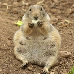 Nature Adventures: Playful Prairie Dogs