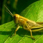 2's & 3's Outdoors: Great Grasshoppers