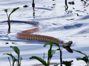 2's & 3's Outdoors: Sneaky Snakes