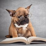 Programs for Kids: Paws to Read