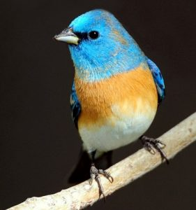 Nature Explorers: Blueberries and Bluebirds