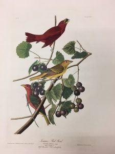 Balance in Action: Audubon from an Artist's Perspective
