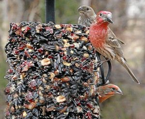Valentine's is For the Birds presented by Fountain Creek Nature Center at Fountain Creek Nature Center, Fountain CO