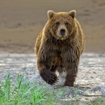 Bears and Mountain Lions, Oh My!