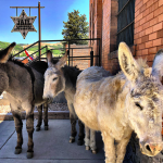 Donkey Derby Days presented by City of Cripple Creek at Cripple Creek, Cripple Creek CO