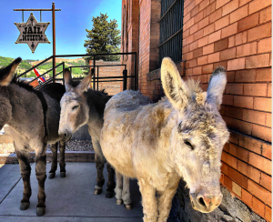 CANCELLED: Donkey Derby Days presented by City of Cripple Creek at Cripple Creek, Cripple Creek CO