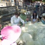 Sheep Shearing presented by Rock Ledge Ranch Historic Site at Rock Ledge Ranch Historic Site, Colorado Springs CO