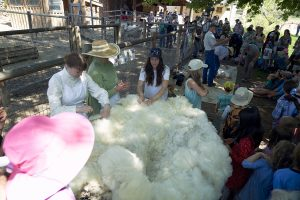 Virtual Sheep Shearing presented by Rock Ledge Ranch Historic Site at Online/Virtual Space, 0 0