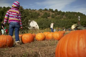 Pumpkin Patch presented by Rock Ledge Ranch Historic Site at Rock Ledge Ranch Historic Site, Colorado Springs CO