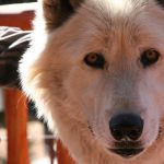 Father's Day With The Wolves presented by Colorado Wolf & Wildlife Center at Colorado Wolf & Wildlife Center, Divide CO