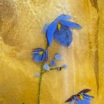 'Images of Nature through Glass' presented by  at ,