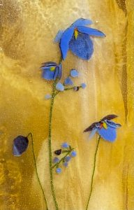 'Images of Nature through Glass' presented by Irv Middlemist and Mary Gorman at ,