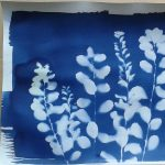 Cyanotype Photography Workshop presented by Old Colorado City Historical Society at Old Colorado City History Center, Colorado Springs CO