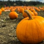Fall Harvest Festival presented by A Music Company Inc. at Gold Hill Mesa Community Center, Colorado Springs CO
